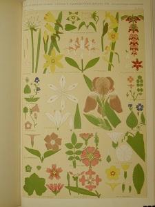 La imagen muestra una página de un libro de gran tamaño en donde aparecen los dibujos a color de varias especies florales como narcisos e iris. Aparecen ordenadas en toda la página y se muestran con la planta entera, sólo la corola, detalles de estambres y pistilos y hojas del tallo y etapas de la floración. Pulse para ampliar.